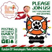 elf at Salty Dog Doggy Daycare